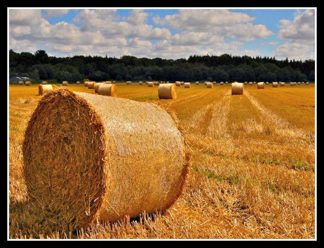 County Kent 01511