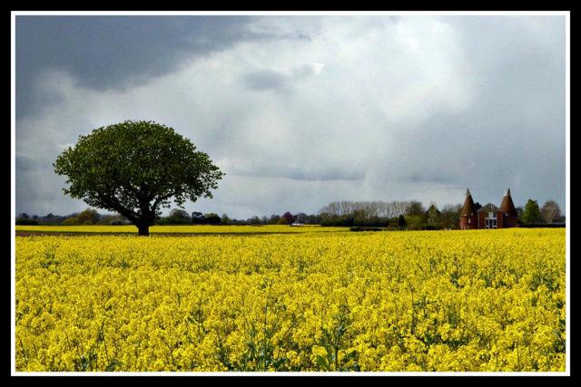 County Kent 5445510
