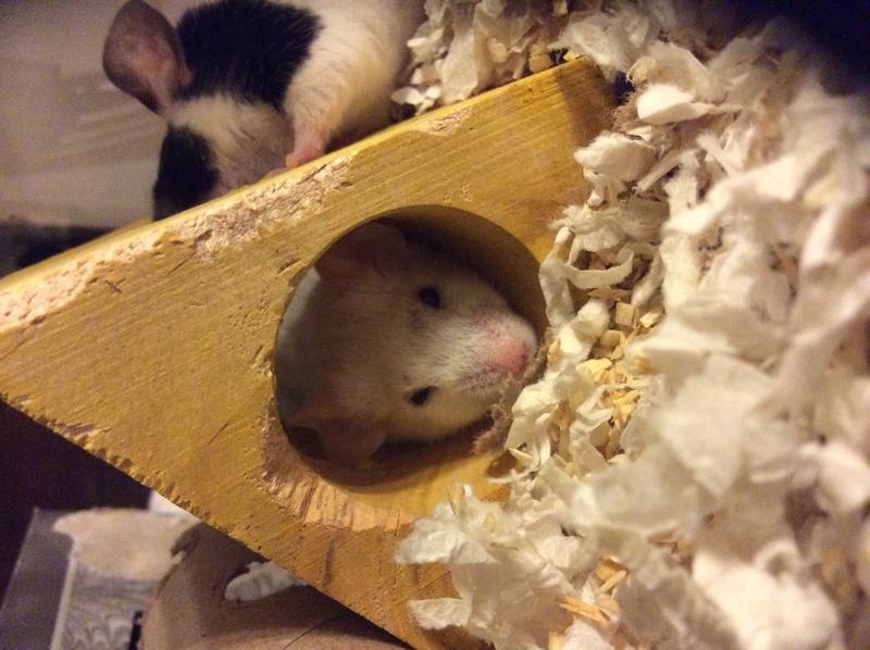 Awkward Mouse Behavior Img_2411