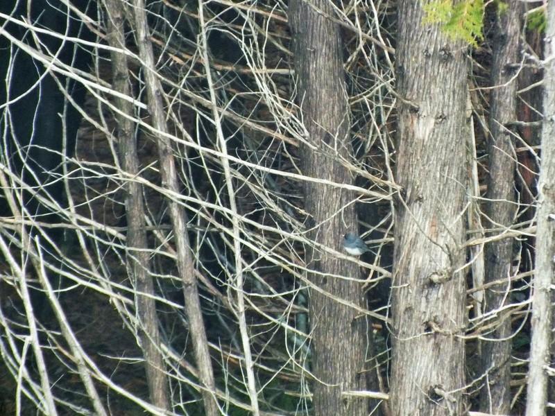 Lac beauchamps - Gatineau Mais qui es cet oiseau? Gatine10