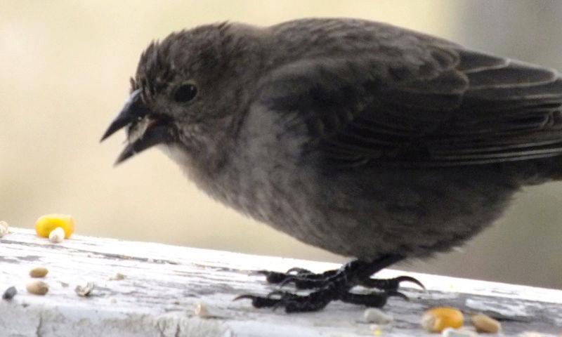 Je me questionne sur cet oiseaux Untitl10