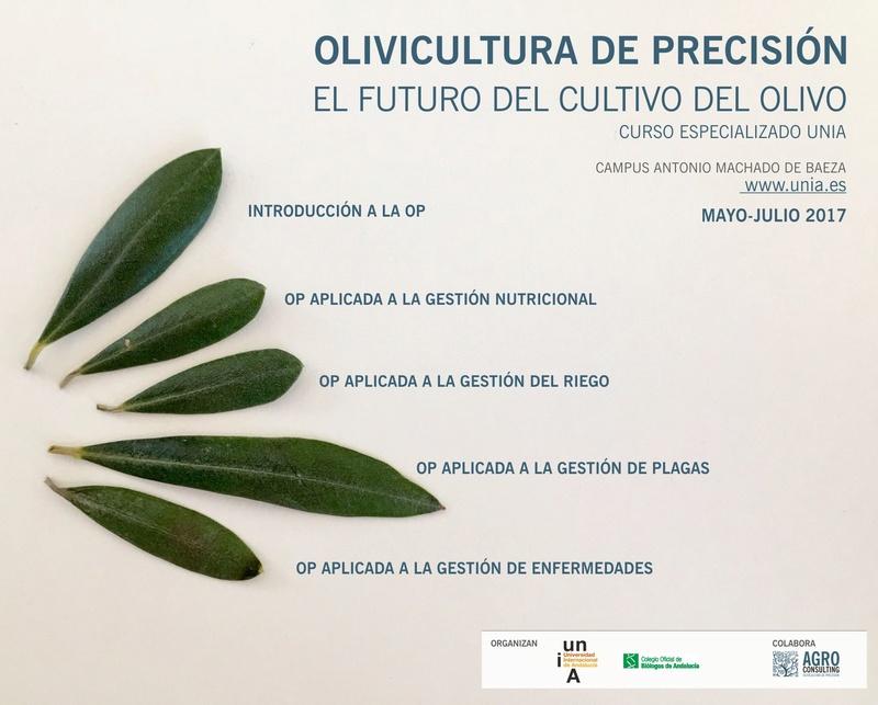 Curso OLIVICULTURA DE PRECISIÓN. EL FUTURO DEL OLIVAR Ii_edi11