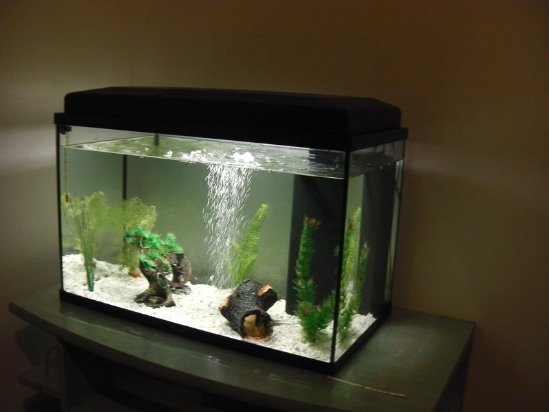 Mon projet d'eau douce (55L ) Imga0314