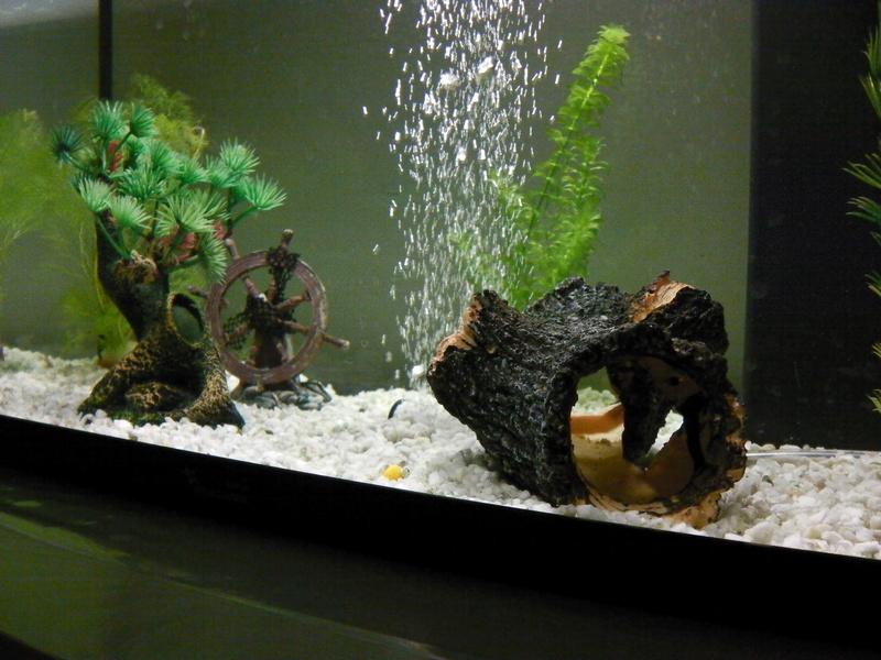 Mon projet d'eau douce (55L ) Imga0315