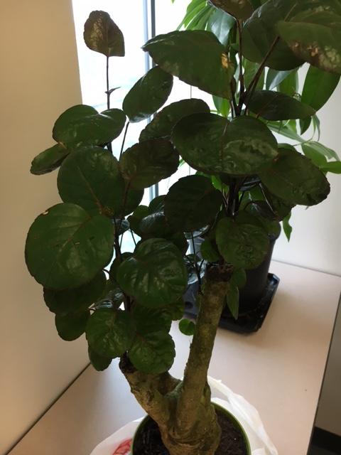 Please help identify my new bonsai tree Img_0712
