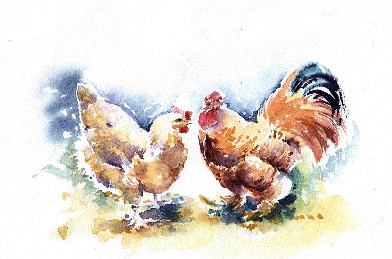 Les animaux peints à l'AQUARELLE - Page 7 Chicke10