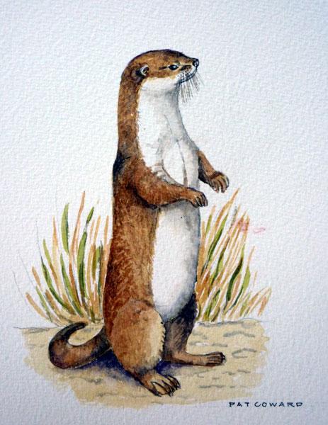 Les animaux peints à l'AQUARELLE - Page 8 Otter_10