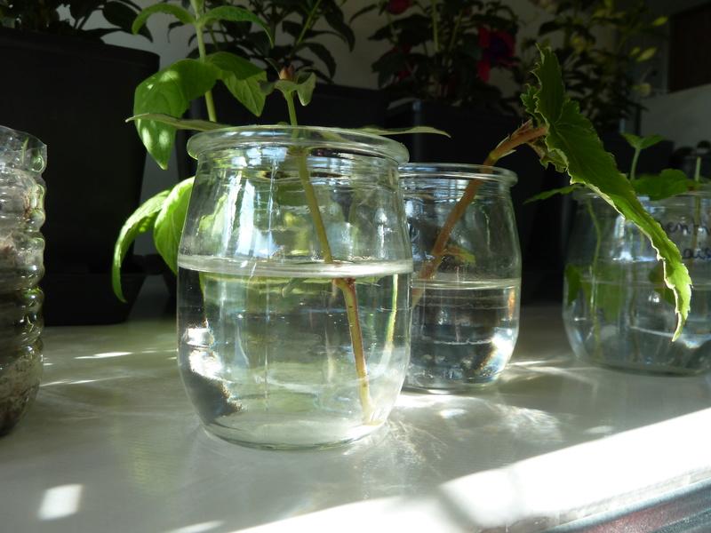 Fuchsia mania......  P1020538
