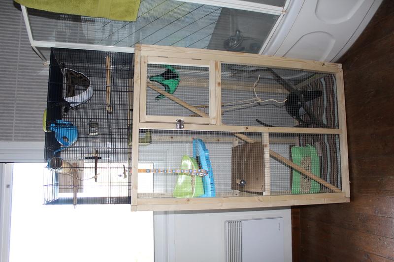 Besoins de conseils pour une cage ! Img_0011