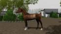 "Equestrian Centre ""Silver Ambassadors"" - Страница 27 Screen15"