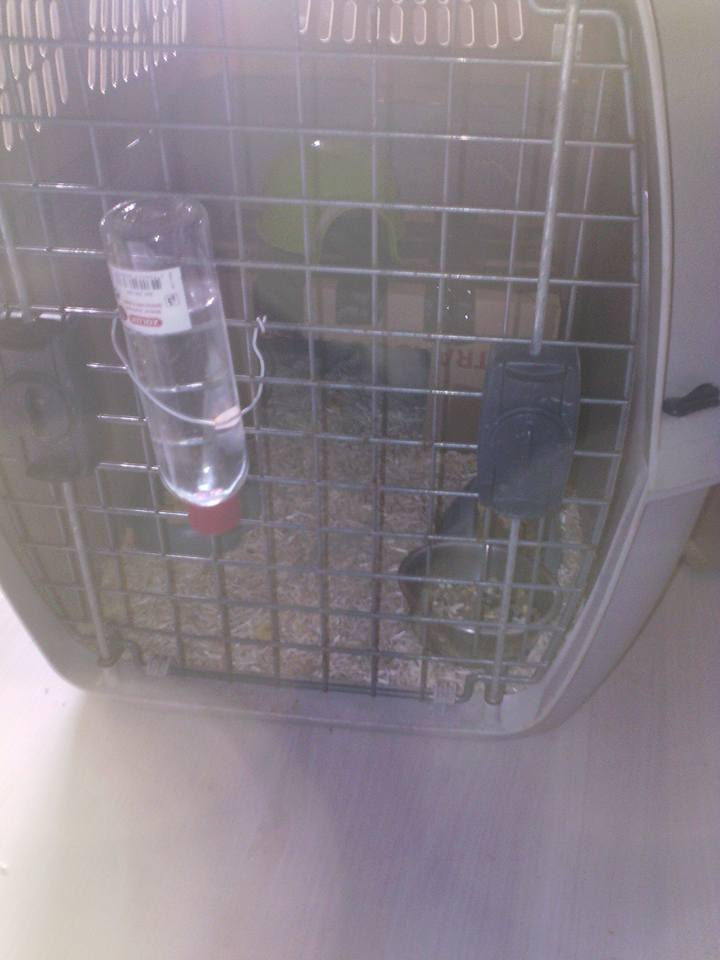 SOS 2 RATS MALE SUR LE 31 18198510