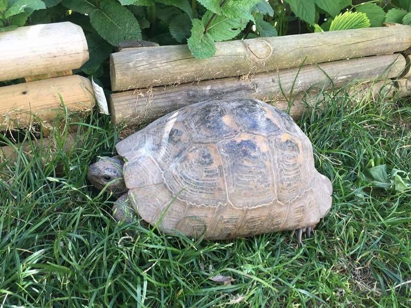 Besoin d'aide pour identifier la race et le sexe de ma tortue Fb_img14