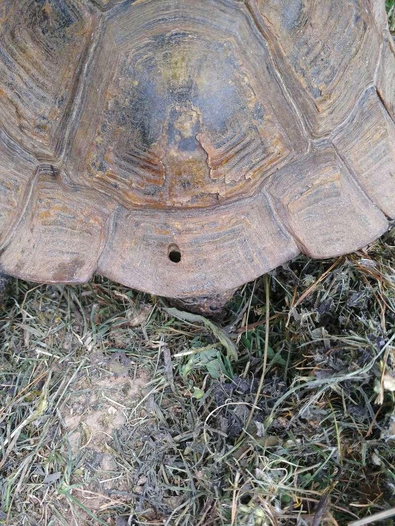 Besoin d'aide pour identifier la race et le sexe de ma tortue Img_2014