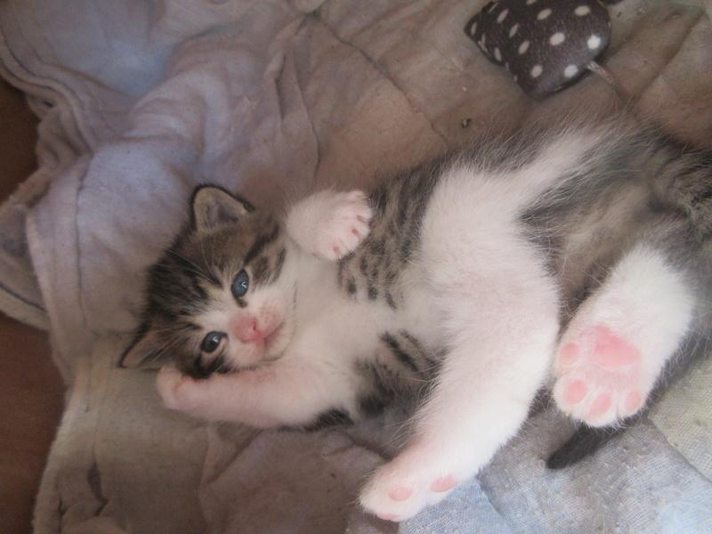 POGBA, bébé de GLUE né le 10 avril 2017 Img_1512