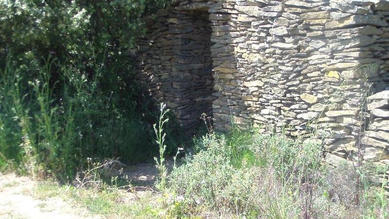 Samedi 06 Mai Tourouzelle :  La pinède de la Bade Sam_0725