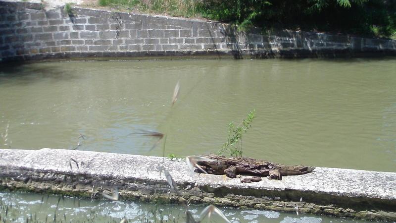 Puichéric balade le long du canal du midi Sam_0780