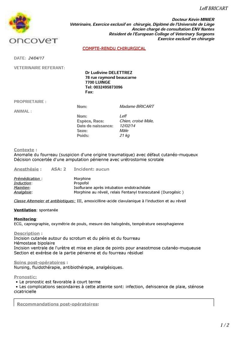 LEFF - mâle croisé de taille petite à moyenne, né env 2014  - adopté par Remi (Belgique) - Page 3 000110