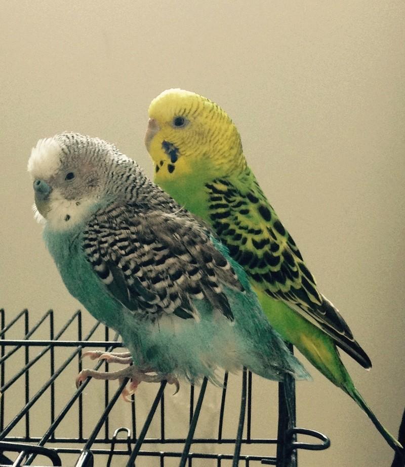 Problème de plumage Image11