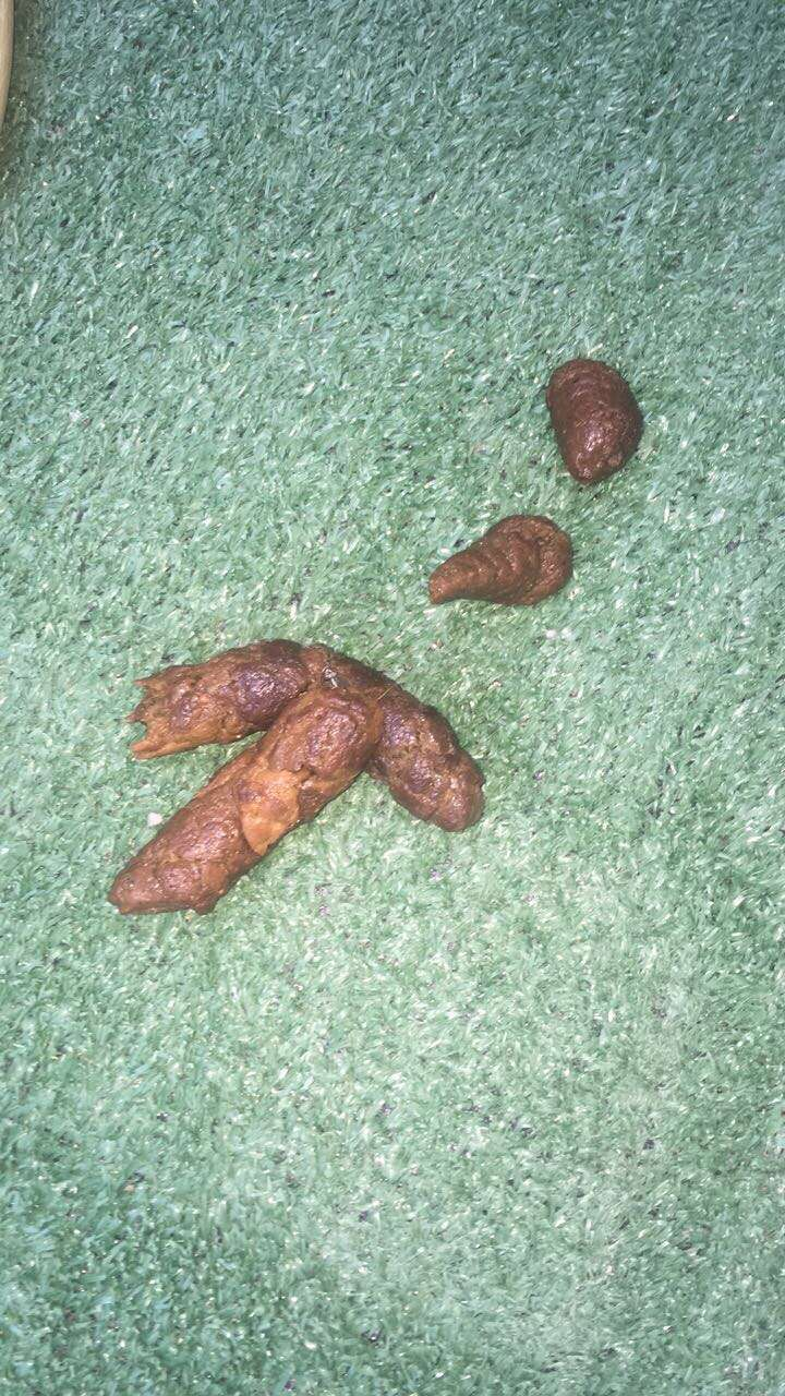 Overbite + Giardia + diaharia (poop pics beware) - Page 3 Img_7811