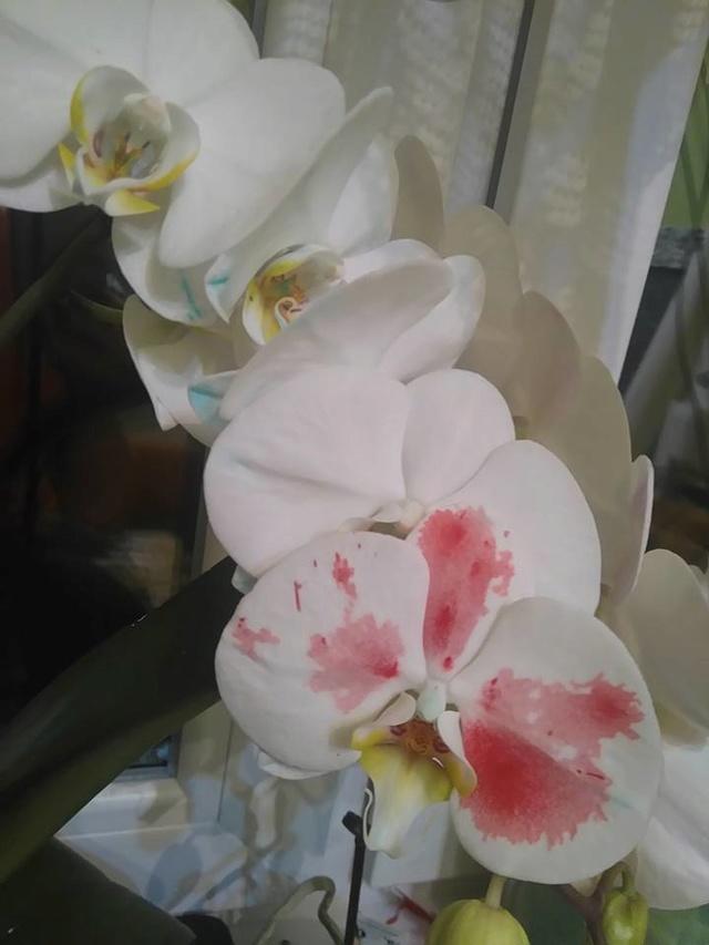 Cvetni kutak - Page 2 18274810
