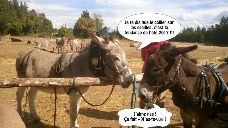 Vaper c'est bon... Même les ânes le disent ! Pierro10