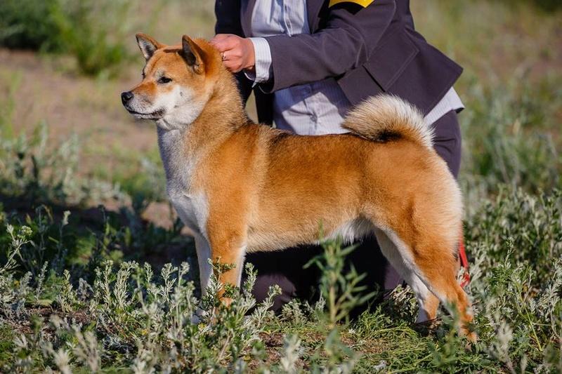 Прошу оценить щенка - Страница 2 Aaaeua11