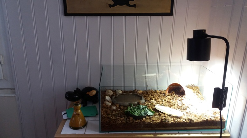 """Vente """"terrarium/aquarium""""+lampe Terrar10"""