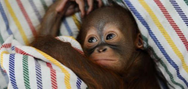 اسم القرد الصغير 2813