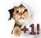 Vote pour le forum =) Chaton10