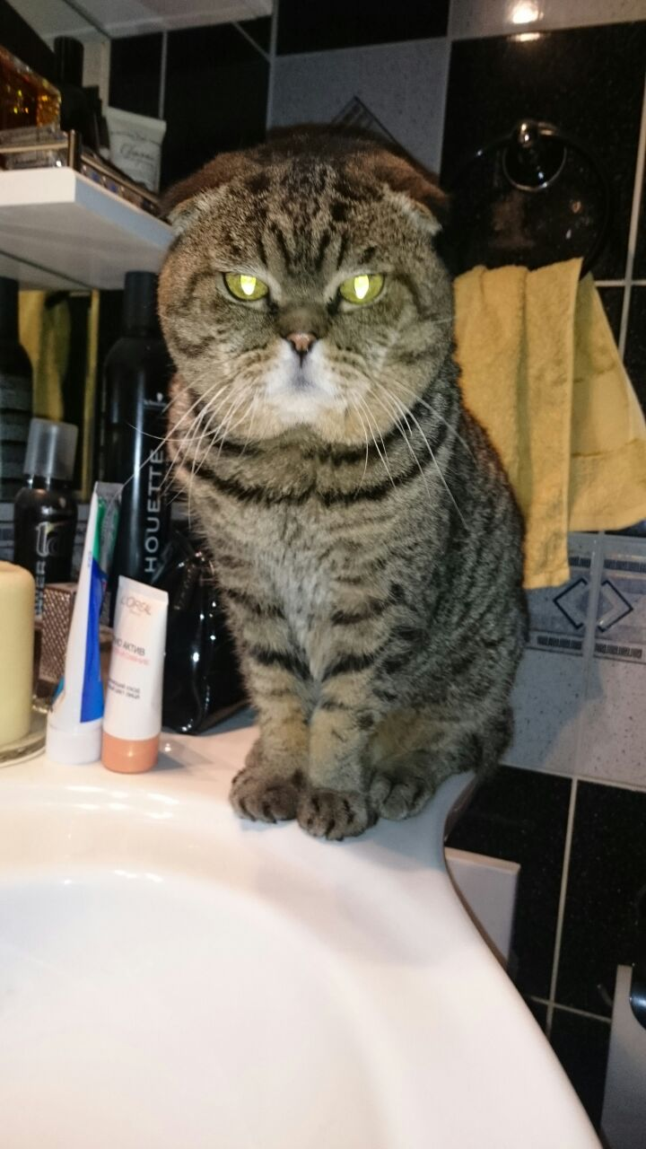 Хочу шибу, но дома кот… рисковано? - Страница 2 Img_1510
