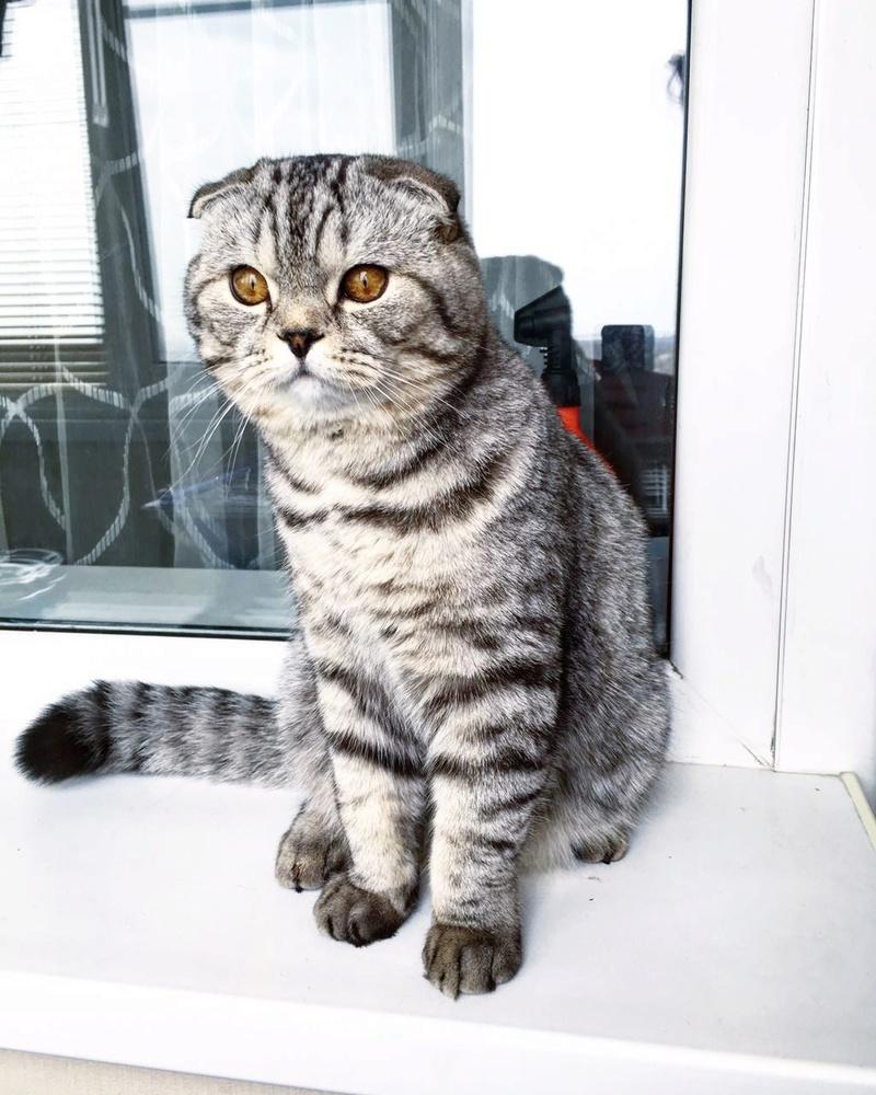 Хочу шибу, но дома кот… рисковано? - Страница 2 Img_3310