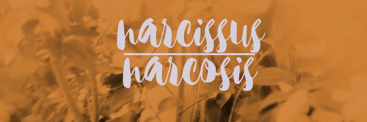 Narcissus Narcosis