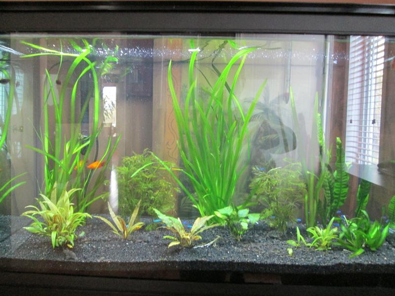 mon aquarium  Img_0914