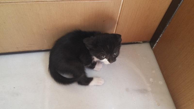 Χαρίζονται 5 γατάκια - Παλλήνη Gataki16