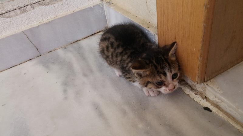 Χαρίζονται 5 γατάκια - Παλλήνη Gataki17
