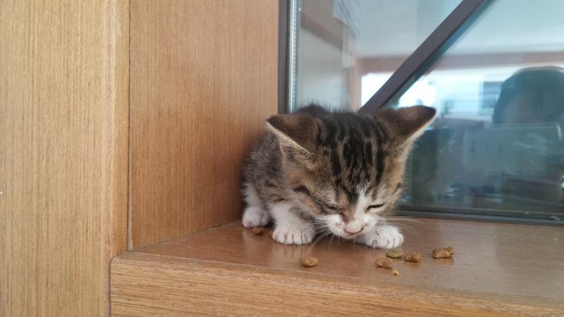 Χαρίζονται 5 γατάκια - Παλλήνη Gataki18
