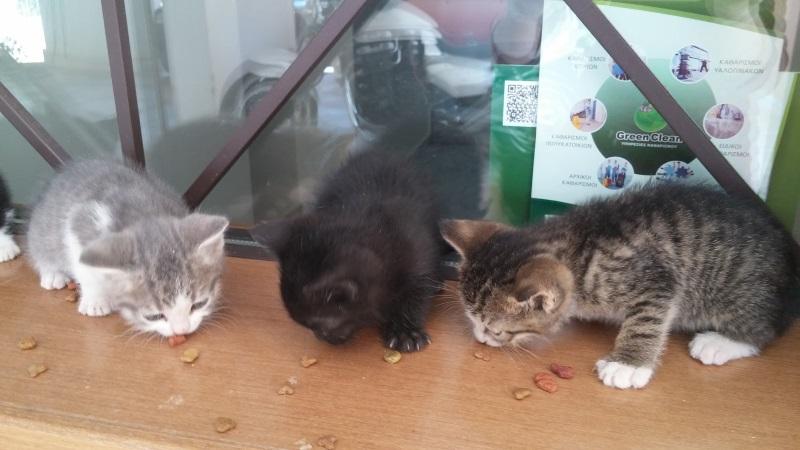 Χαρίζονται 5 γατάκια - Παλλήνη Gataki20