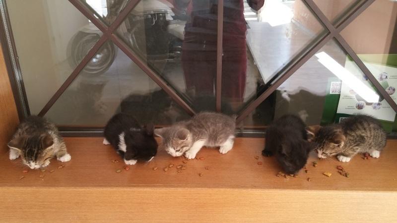 Χαρίζονται 5 γατάκια - Παλλήνη Gataki21