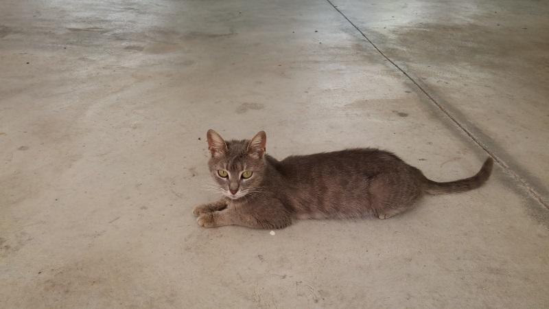 Χαρίζονται 5 γατάκια - Παλλήνη Mama11