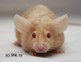 Please help! Adopted orphaned mouse! Fawnbr10