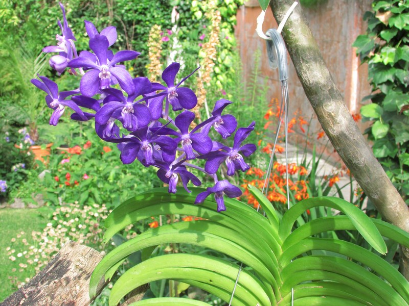 quelques orchidées Img_0118