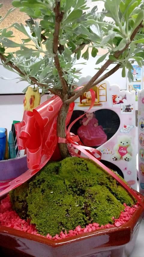 AYUDA no se que especie es mi bonsai 18554811