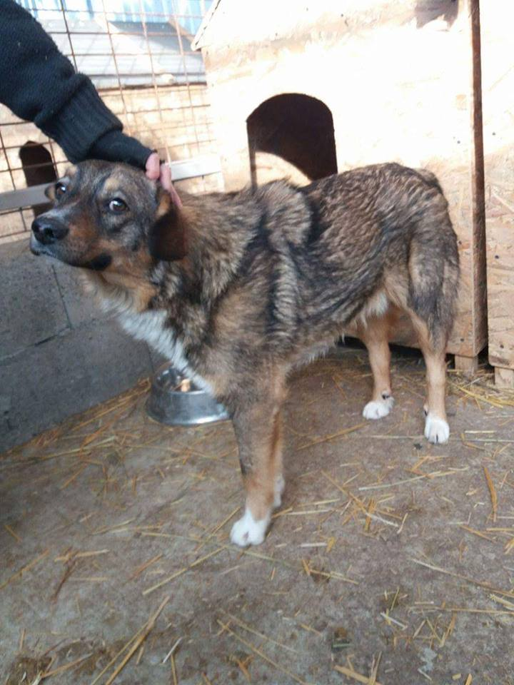 CHARLY, né 2015 (FOURRIERE PIATRA) reserve Allemagne 16640510