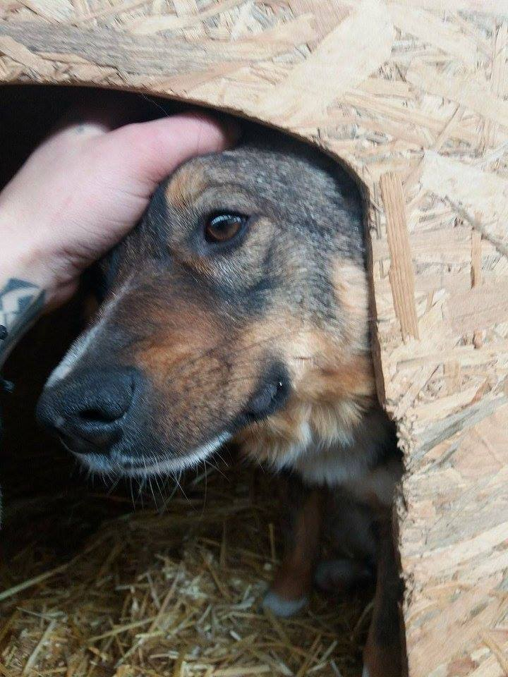 CHARLY, né 2015 (FOURRIERE PIATRA) reserve Allemagne 17156210