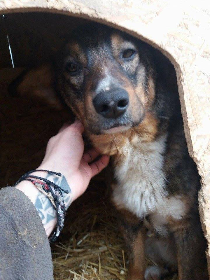 CHARLY, né 2015 (FOURRIERE PIATRA) reserve Allemagne 17190710