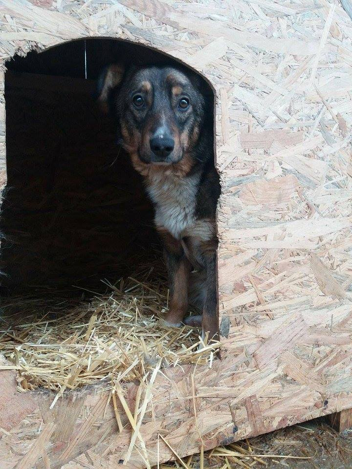 CHARLY, né 2015 (FOURRIERE PIATRA) reserve Allemagne 17191110