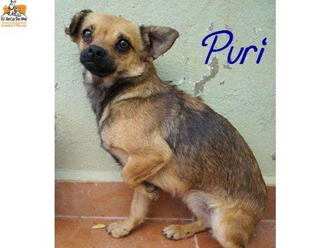 PURI / PIWI - EN FA DANS LE 14 18766110