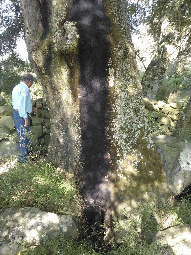 Qué le pasó a este árbol? Wp_00010