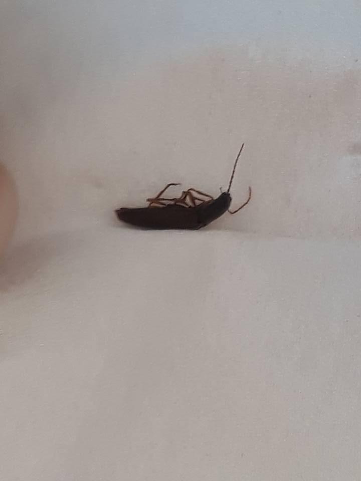 quel est cet insecte 18622210