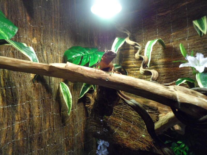 Terrarium maison de mon iguane rouge gaston Sam_1610